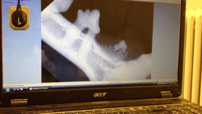 Tandveterinär